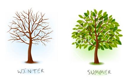 WinterSummerIllus