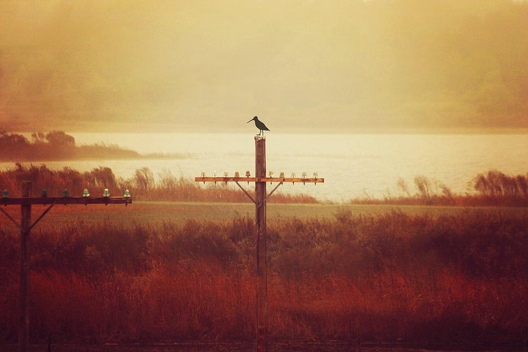 CollectingInsulators_Bird