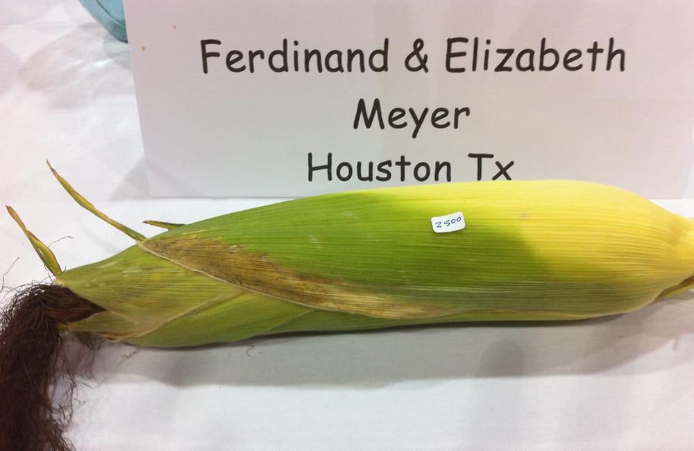 ear of corn inspiration