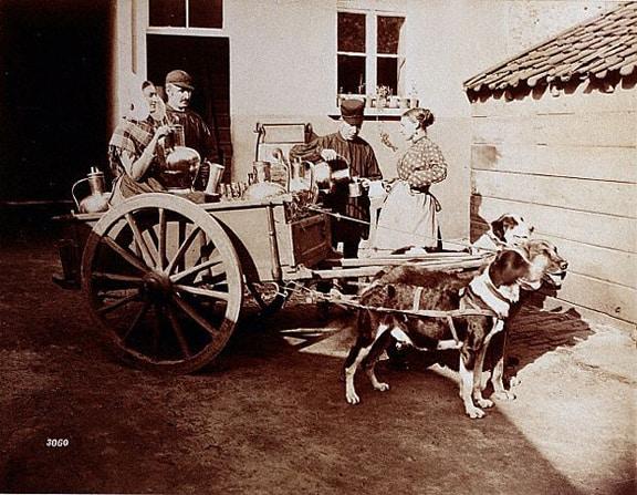 Dog-Driven Teacart