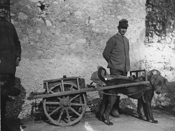 DogcartItalian1917