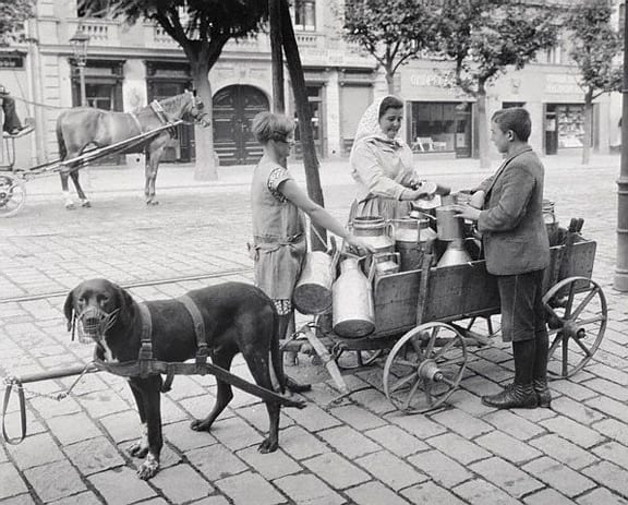 Milk Vendor Selling from Dog Cart