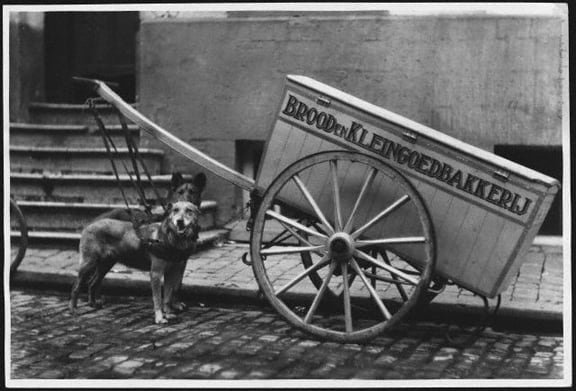 Dog-drawn Cart