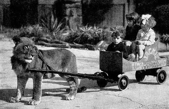 lioncart