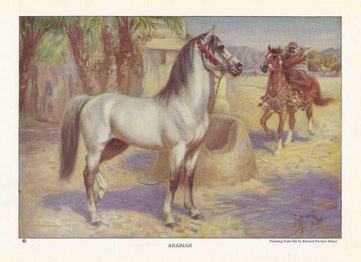 ArabianHorseCardPainting