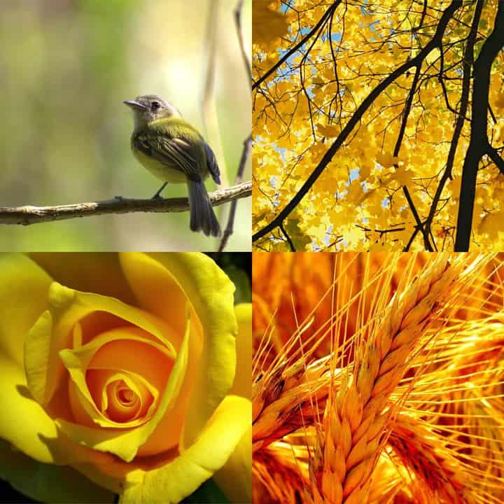 YellowNature