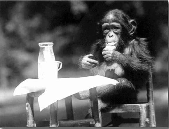 DrinkingChimpanzee
