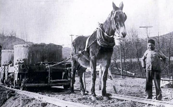 MuleHauling