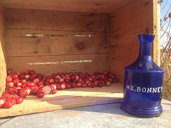 BonneyCranberrys