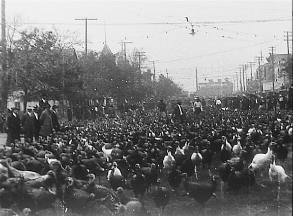 The_Sloane_Collection,_no._13_-_First_Turkey_Trot,_Cuero,_TX_(1912)_tn