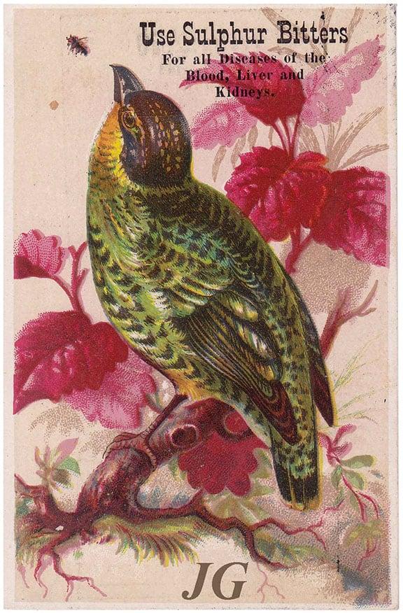 Birds_front_2Gourd