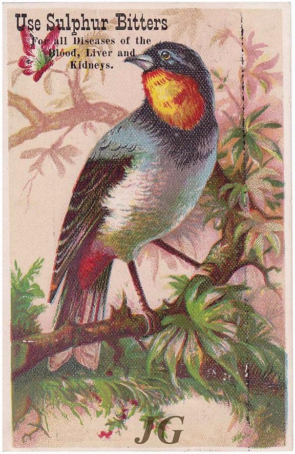 Birds_front_4_Gourd
